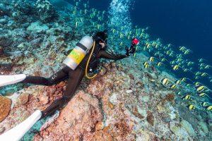 Palau diver